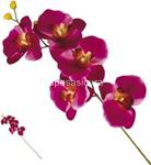 stelo   p. orchidea standard nic36158