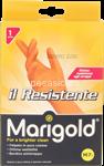 marigold resistente media