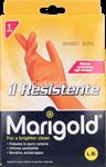 marigold resistente grande