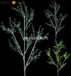 stelo   p. eucalipto bf50101 $$