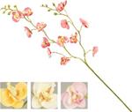 stelo   p. orchidea easy 86cm nic55451